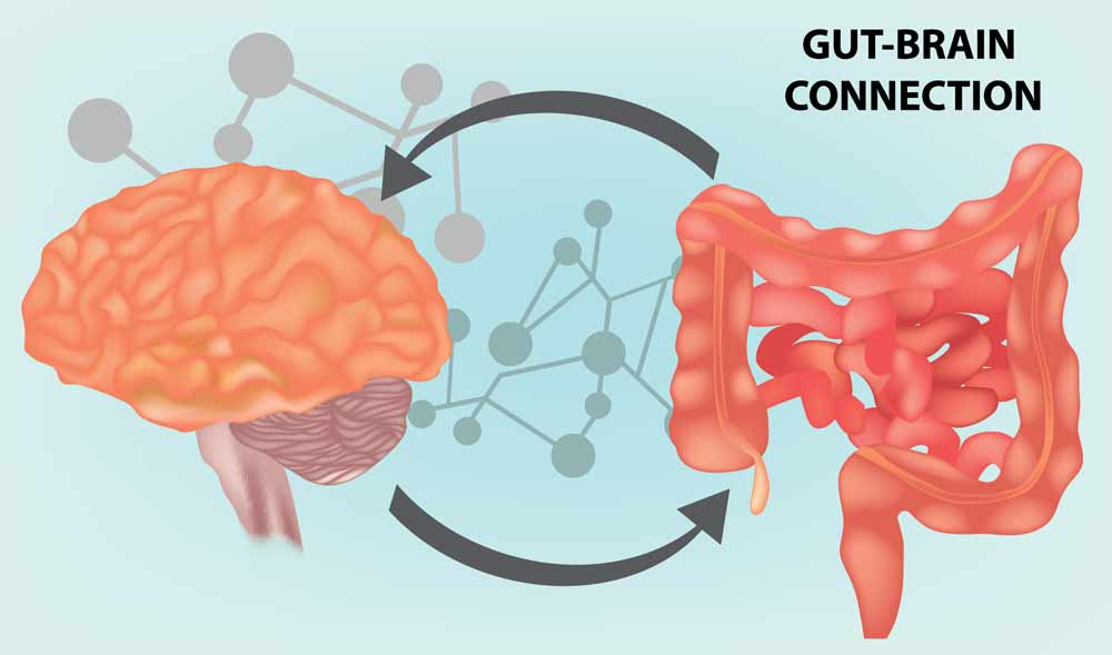 The gut and brain connection diagram